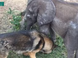 feature-elephant-befriends-dog