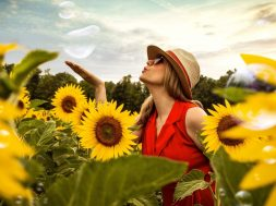 sunflower field-2