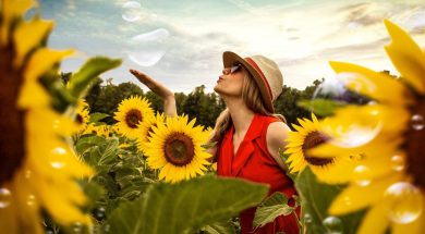 sunflower field-2